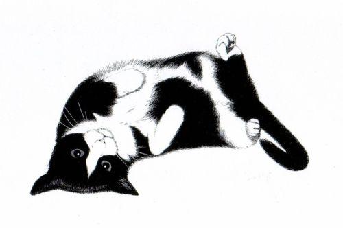 rollingcat-portrait-500